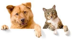 photo of a dog and cat